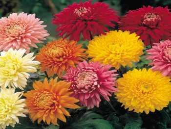 Plant, Tree and Flower Specials